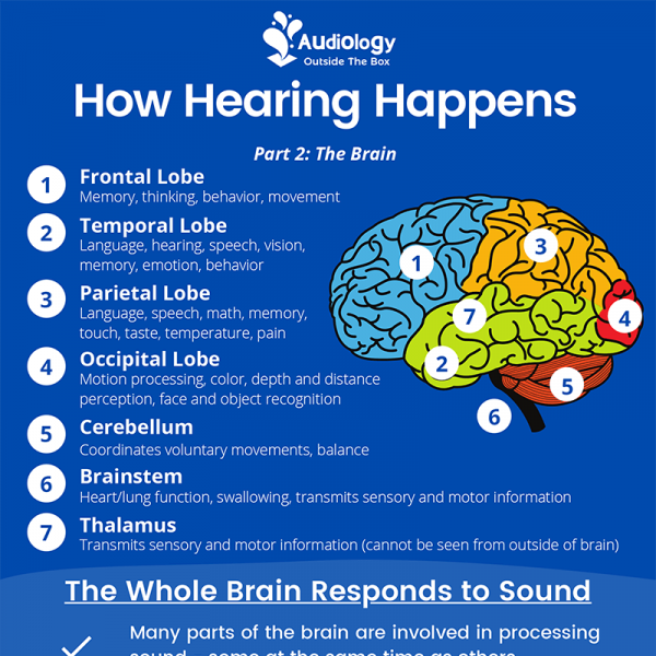 How Hearing Happens Part 2: The Brain